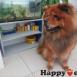 HAPPYVET – VETERINARSKA AMBULANTA