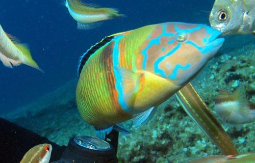diving_triporte_05
