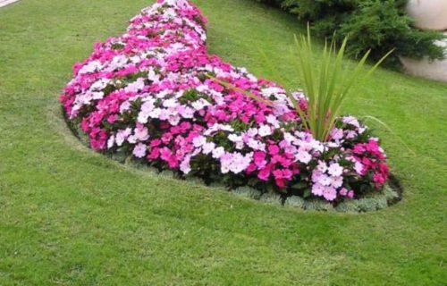 callegra_hortikultura_04